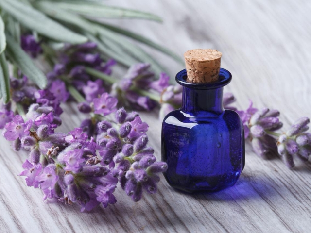 Excellent Benefits of Lavender Oil for Hair Growth