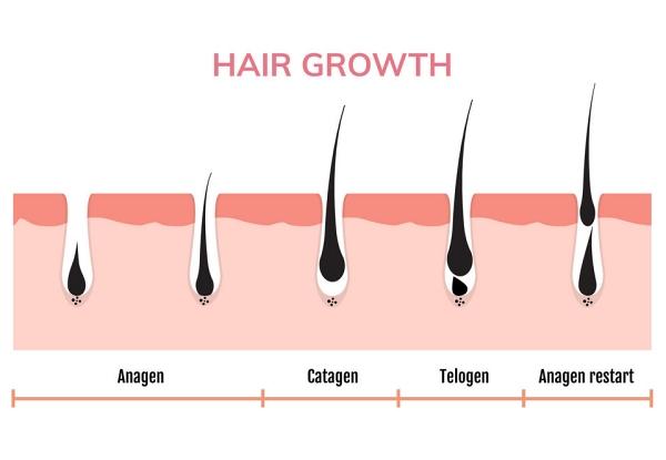 Lavender Oil Hair Growth